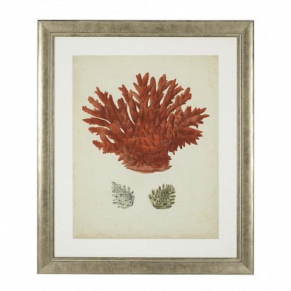 Настенный декор EICHHOLTZ Prints Antique red corals set of 6 арт 111741: фото 6