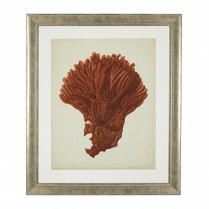 Настенный декор EICHHOLTZ Prints Antique red corals set of 6 арт 111741: фото 8