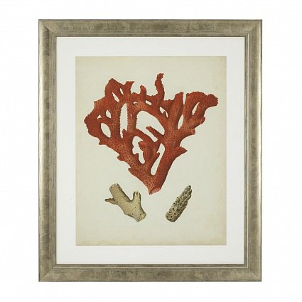 Настенный декор EICHHOLTZ Prints Antique red corals set of 6 арт 111741: фото 4