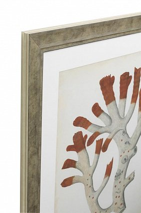 Настенный декор EICHHOLTZ Prints Antique red corals set of 6 арт 111741: фото 2